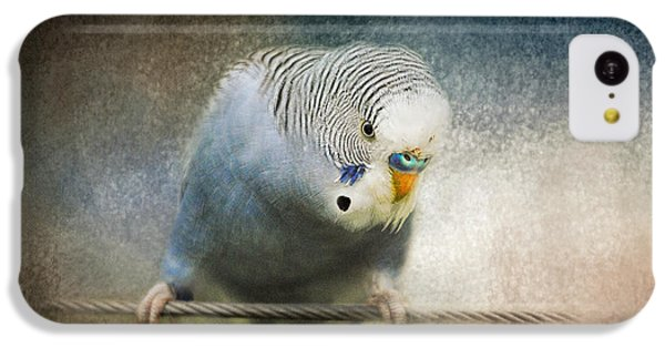 The Budgie Collection - Budgie 3 IPhone 5c Case by Jai Johnson