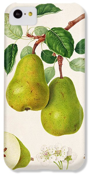The D'auch Pear IPhone 5c Case by William Hooker
