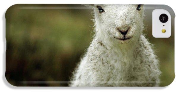 The Lamb IPhone 5c Case by Angel  Tarantella