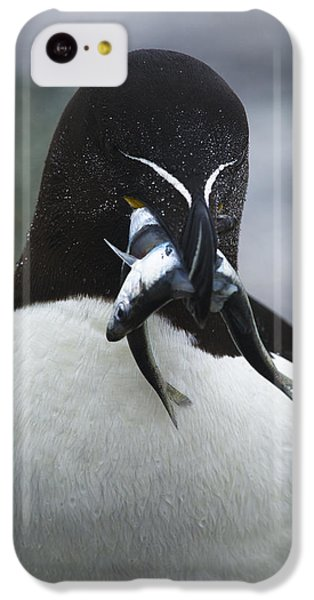 Feeding Time... IPhone 5c Case by Nina Stavlund
