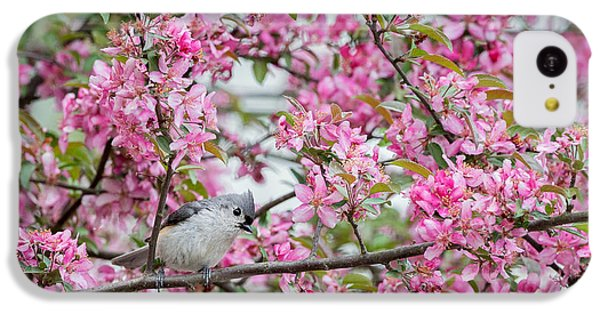 Tufted Titmouse In A Pear Tree IPhone 5c Case by Bill Wakeley