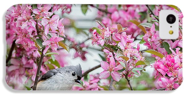 Tufted Titmouse In A Pear Tree Square IPhone 5c Case by Bill Wakeley