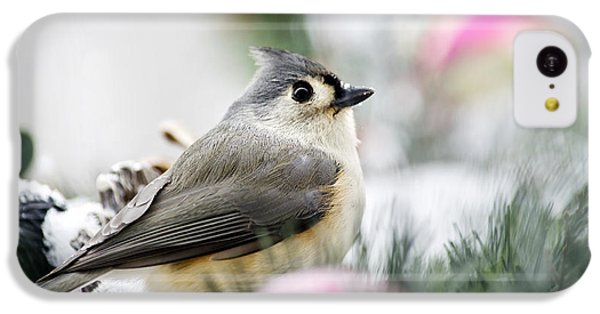 Tufted Titmouse Portrait IPhone 5c Case by Christina Rollo