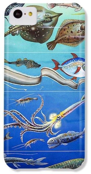 Underwater Creatures Montage IPhone 5c Case by English School