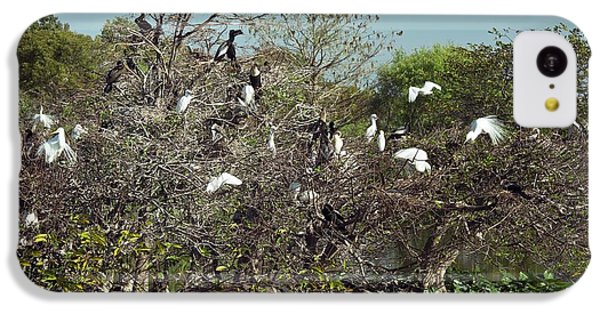 Wading Birds Roosting In A Tree IPhone 5c Case by Bob Gibbons