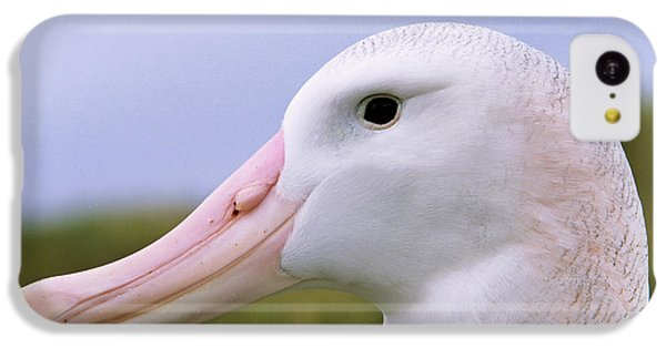 Wandering Albatross (diomendea Exulans IPhone 5c Case by Martin Zwick