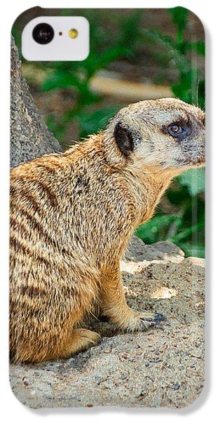 Watchful Meerkat Vertical IPhone 5c Case by Jon Woodhams