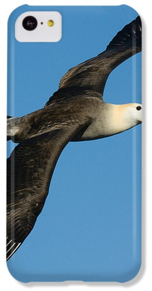 Waved Albatross Diomedea Irrorata IPhone 5c Case by Panoramic Images
