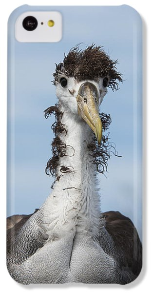 Waved Albatross Molting Juvenile IPhone 5c Case by Pete Oxford