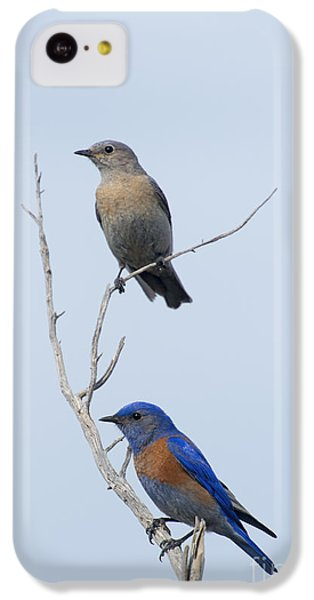 Western Bluebird Pair IPhone 5c Case by Mike  Dawson