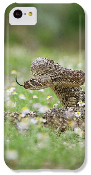 Western Diamondback Rattlesnake IPhone 5c Case by Larry Ditto
