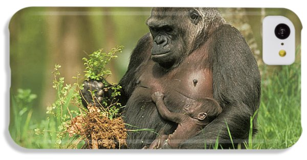 Western Gorilla And Young IPhone 5c Case by M. Watson