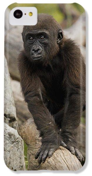 Western Lowland Gorilla Baby IPhone 5c Case by San Diego Zoo