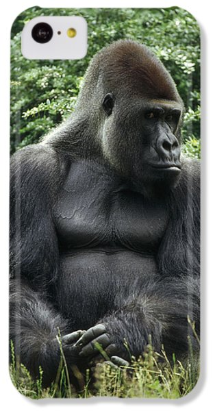 Western Lowland Gorilla Male IPhone 5c Case by Konrad Wothe