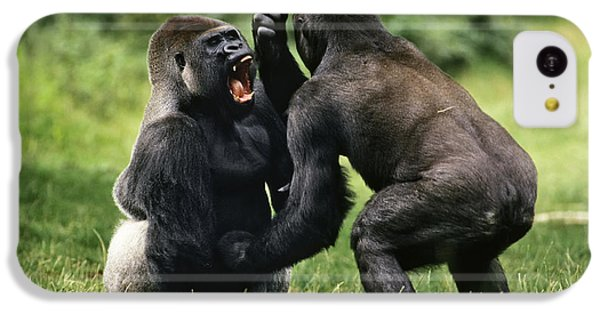 Western Lowland Gorilla Males Fighting IPhone 5c Case by Konrad Wothe