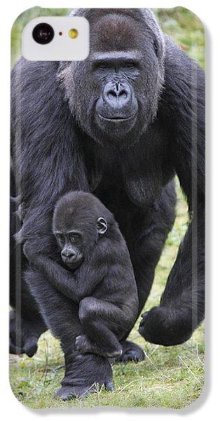 Western Lowland Gorilla Walking IPhone 5c Case by Duncan Usher