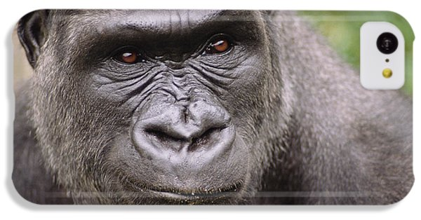 Western Lowland Gorilla Young Male IPhone 5c Case by Gerry Ellis