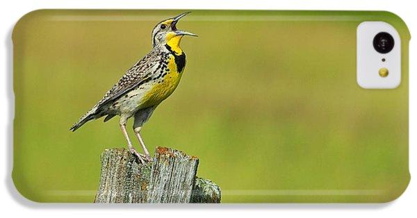 Western Meadowlark IPhone 5c Case by Tony Beck