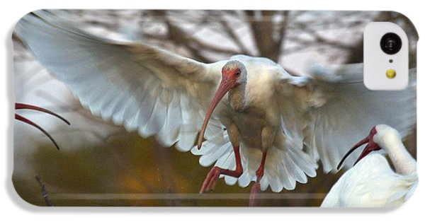 White Ibis IPhone 5c Case by Mark Newman