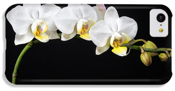White Orchids IPhone 5c Case by Adam Romanowicz