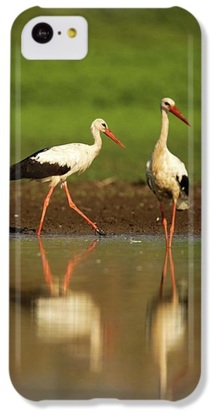 White Stork (ciconia Ciconia) IPhone 5c Case by Photostock-israel