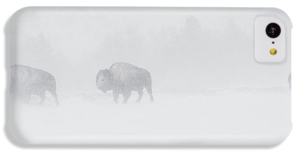 Whiteout IPhone 5c Case by Sandy Sisti