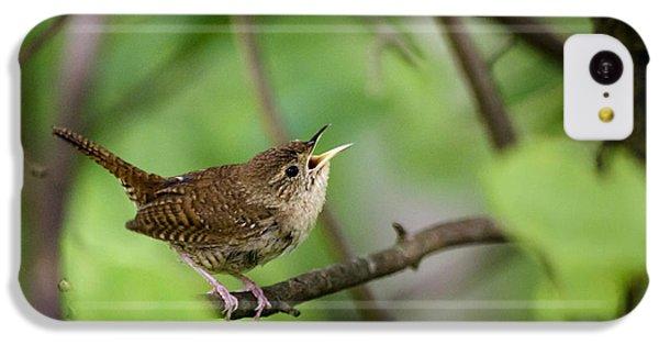 Wild Birds - House Wren IPhone 5c Case by Christina Rollo