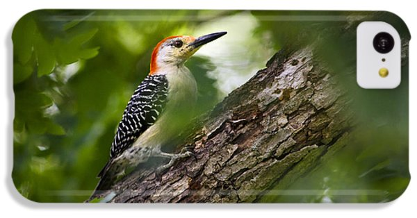 Red Bellied Woodpecker IPhone 5c Case by Christina Rollo