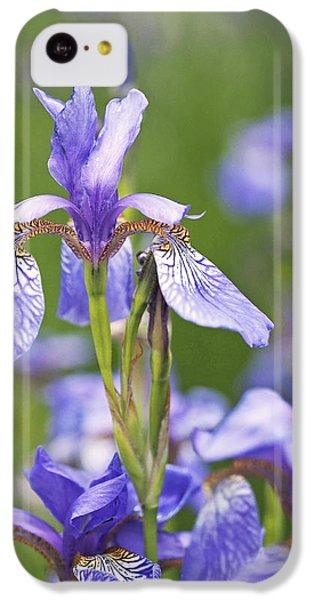 Wild Irises IPhone 5c Case by Rona Black