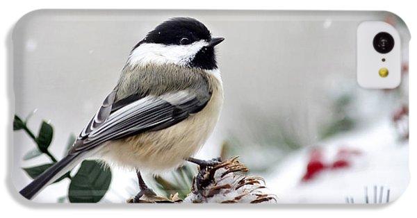 Winter Chickadee IPhone 5c Case by Christina Rollo