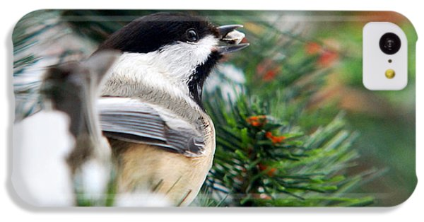 Winter Chickadee With Seed IPhone 5c Case by Christina Rollo
