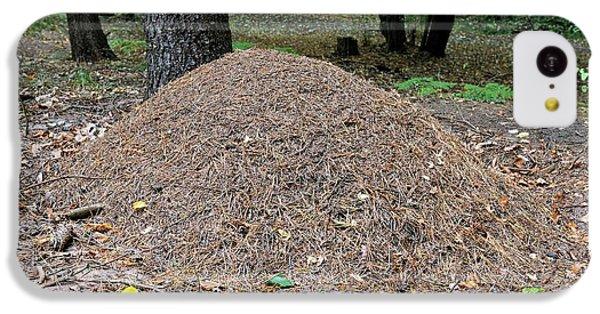 Wood Ant Nest IPhone 5c Case by Bildagentur-online/mcphoto-schulz