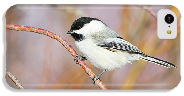Wyoming, Sublette County, Black-capped IPhone 5c Case by Elizabeth Boehm