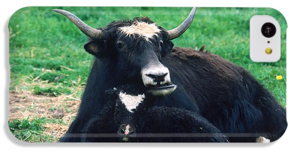 Yak IPhone 5c Case by Mark Newman
