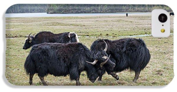 Yaks Fighting In Potatso National Park IPhone 5c Case by Tony Camacho