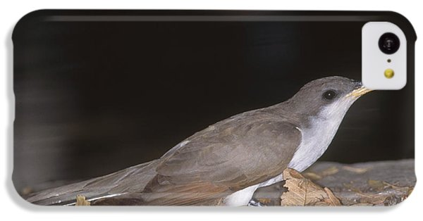 Yellow-billed Cuckoo IPhone 5c Case by Gregory G. Dimijian, M.D.