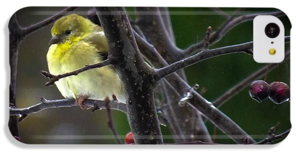 Yellow Finch IPhone 5c Case by Karen Wiles