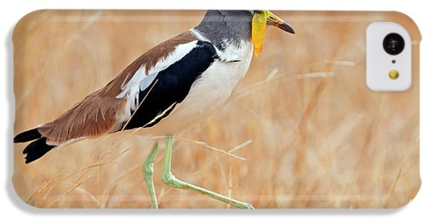 Yellow-wattled Lapwing IPhone 5c Case by Bildagentur-online/mcphoto-schaef
