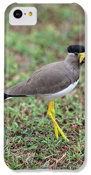 Yellow-wattled Lapwing IPhone 5c Case by Peter J. Raymond