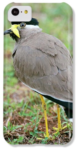 Yellow Wattled Lapwing IPhone 5c Case by Tony Camacho