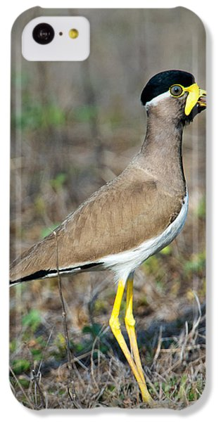 Yellow-wattled Lapwing Vanellus IPhone 5c Case by Panoramic Images