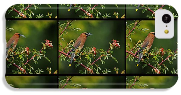 Cedar Wax Wing Having Lunch IPhone 5c Case by Jim Boardman