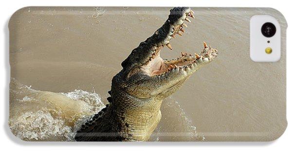 Salt Water Crocodile 2 IPhone 5c Case by Bob Christopher
