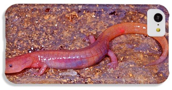 Ozark Blind Cave Salamander IPhone 5c Case by Dante Fenolio