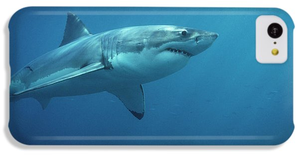 Great White Shark Carcharodon IPhone 5c Case by Mike Parry