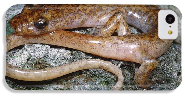 Cave Salamander IPhone 5c Case by Dante Fenolio