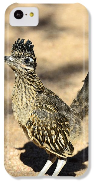 A Baby Roadrunner  IPhone 5c Case by Saija  Lehtonen