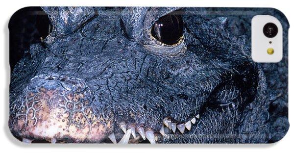 African Dwarf Crocodile IPhone 5c Case by Dante Fenolio