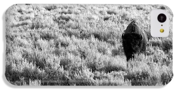 American Bison In Black And White IPhone 5c Case by Sebastian Musial