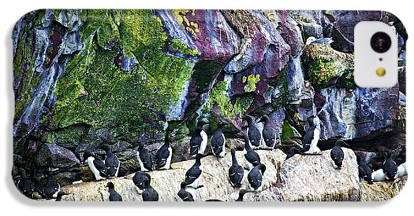 Birds At Cape St. Mary's Bird Sanctuary In Newfoundland IPhone 5c Case by Elena Elisseeva